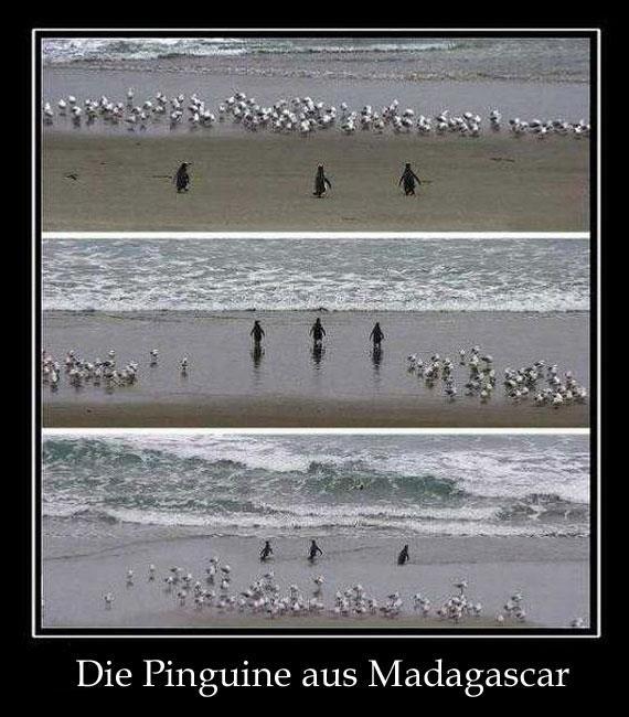 die-pinguine-aus-madagascar