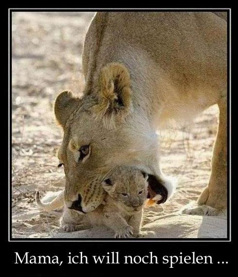 kleiner-löwe-will-spielen